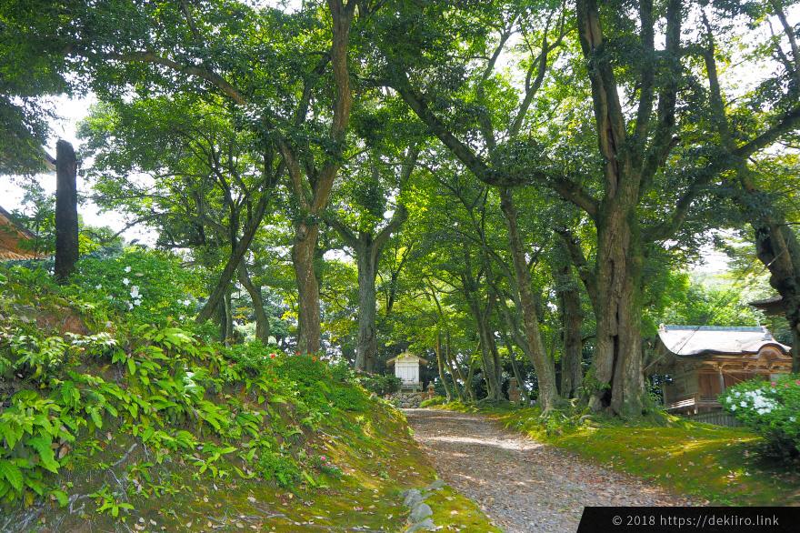 妙成寺内の森林を散策