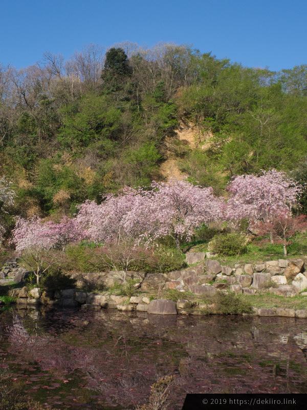 羽咋市千路町「古永建設」の美しい庭園 (2019年4月16日撮影)