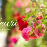 志賀町にあるフローリィ (5月の花々)