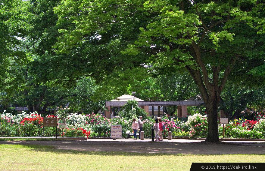 初夏の金沢南総合運動公園バラ園の雰囲気