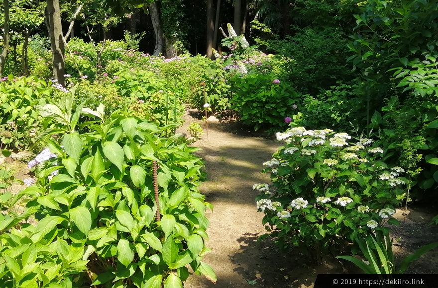 本堂の隣にある牡丹と紫陽花の庭園