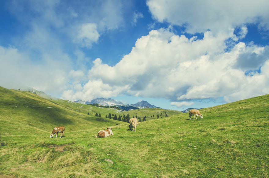 夏の放牧場のイメージ